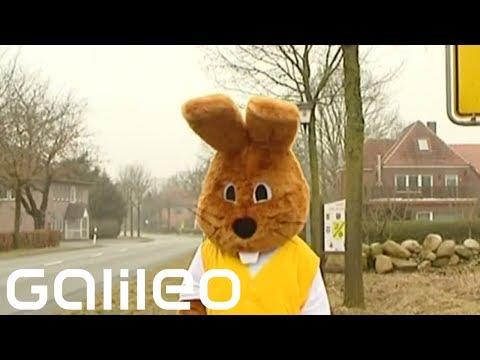 Kde bydlí velikonoční zajíček?