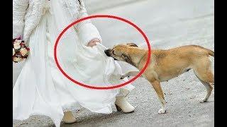 Никто на свадьбе не знал, что было под платьем, но эта собака сделала немыслимое