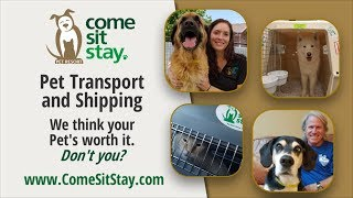 Come Sit Stay Pet Shipping marketing video - Parker Colorado