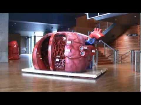 Niere und Behandlung von Bluthochdruck