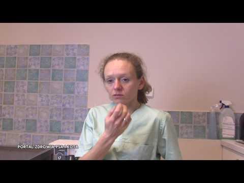 Terapia pijawek na rdzeniu przepukliny