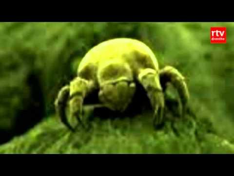 A paraziták típusai és gazdasejtjeik