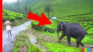 Download Youtube: Pet Elephant meets her friend after a year ★ AMAZING Bond of Love