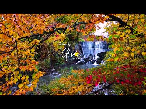 The Incredible Fall Foliage of New England
