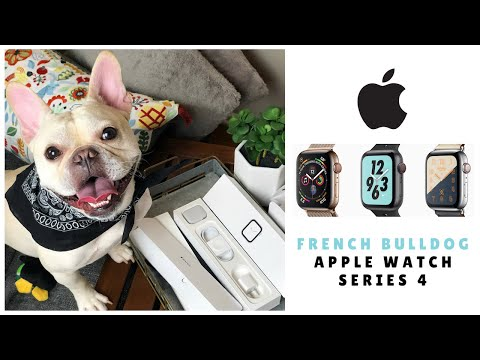 French Bulldog Shop with Me + Unboxing: Apple Watch Series 4 |  Frenchie Trekker TV 🎄Vlogmas Day 25