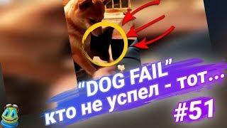 ПРИКОЛЫ 2018, Июль, №51, Кто не успел - тот опоздал (Dog Fail) / RFV