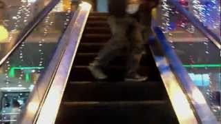 preview picture of video 'City Center Kathmandu Nepal - best shopping center'