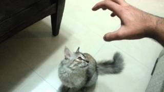 preview picture of video 'My Cat vs My Hand'