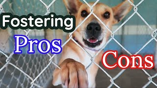 The WORST Part of Dog Fostering NO ONE Tells You! 🐶PROS + CONS of Fostering a Dog