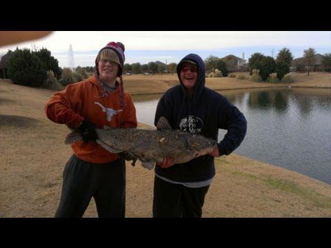 40lb Catfish caught in pond!