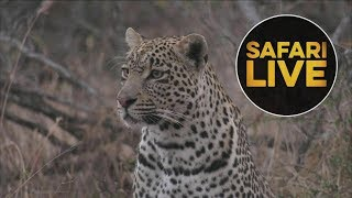 safariLIVE - Sunrise Safari - August 2, 2018