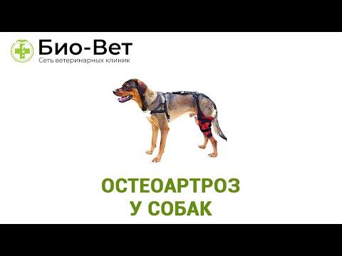 Остеоартроз у собак. Ветеринарная клиника Био-Вет.