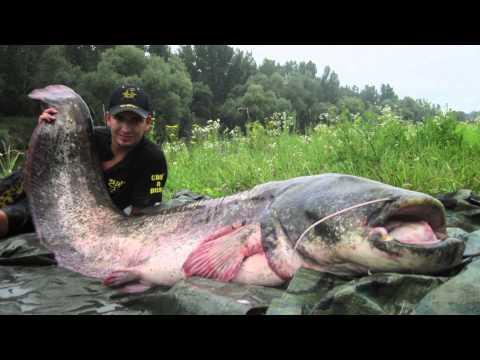 Ryby, rybky, rybičky – 22/2014, premiéra 24.10.2014