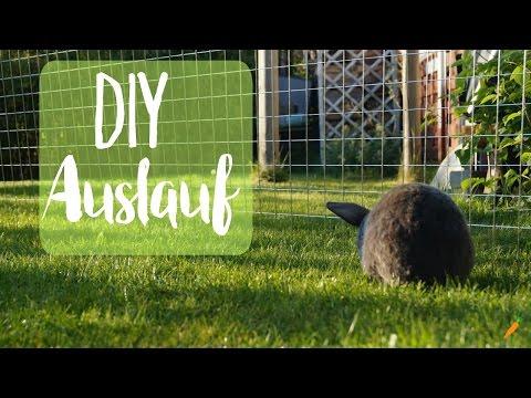 Auslauf für Kaninchen selber bauen I DIY Freilauf