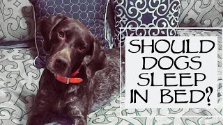 You Ask We Answer - Should I Let My Dog Sleep In Bed With Me Episode 31: Part 1
