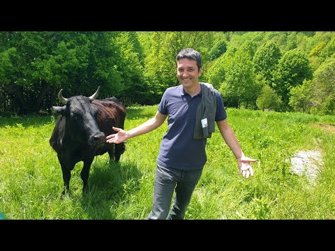Uzgoj japanskih goveda u srcu Hrvatske