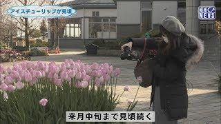 1月24日 びわ湖放送ニュース