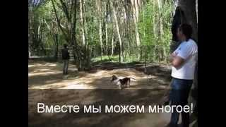 Возводим площадку для собак! г. Воронеж