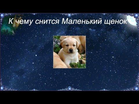 К чему снится Маленький щенок (Сонник)
