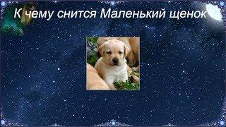 К чему снятся Щенки видео -К чему снится Маленький щенок (Сонник)