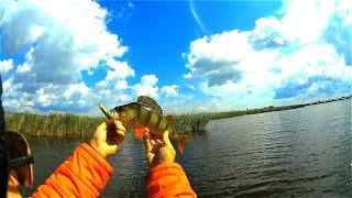 Озеро топольное алтайский край рыбалка