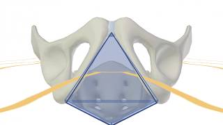 3D Tour of the Perineum