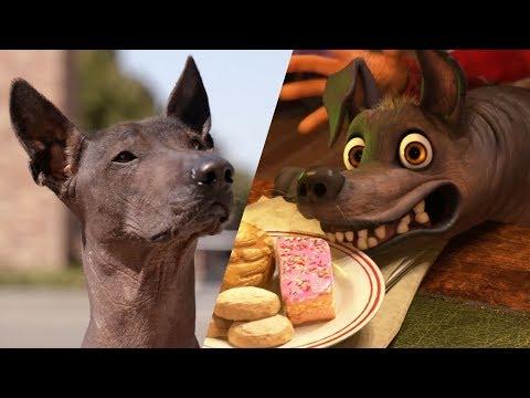 Xolo Tour of Pixar Animation Studios - National Dog Day