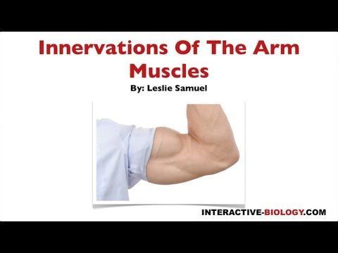Comme enlever la graisse de la poitrine des muscles
