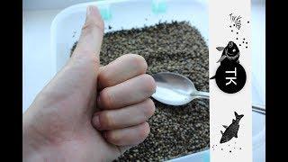 Рыбная прикормка с семенами конопли