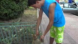 preview picture of video 'Un macaque a Monastir'