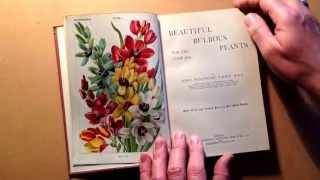 016 - Beautiful Bulbous Plants