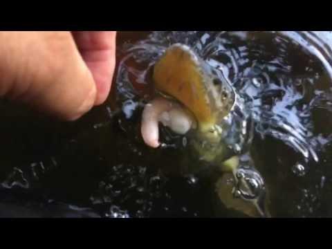 สิ่งที่ฝันของหนอนในปลา