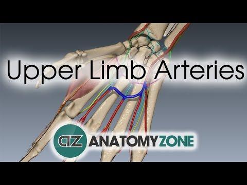 Unaczynienie kończyny górnej - ręka i nadgarstek