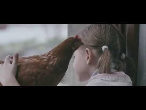 The Chicken ( The Chicken )