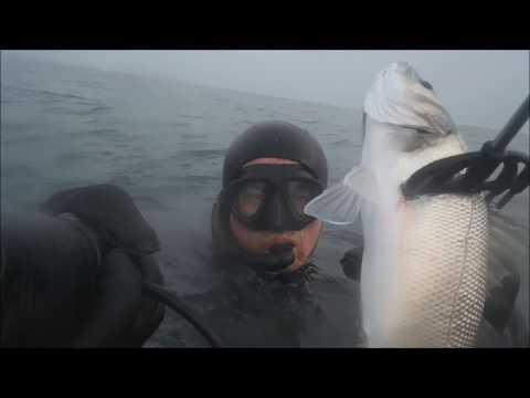 La pesca come trovare una picca