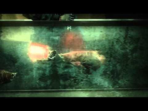 Resident Evil: Revelations - Case File videa