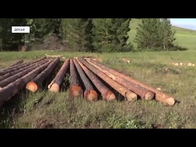 В Савватеевке незаконно вырубили лес