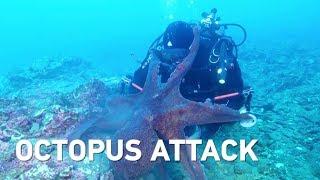 Massive Octopus Attacks Diver, Drags Equipment Through Sea