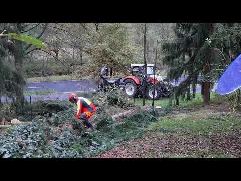 Baumpflege Schaumlöffel
