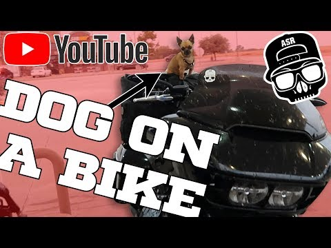 How To Train Your Dog To Ride / Motorcycle Dog Travel Tips