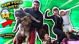 HOW WE FEED OUR 100 POUND PUPPY!!!
