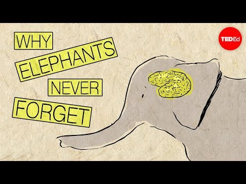 This TED-Ed Video Explains How The Mind of Elephants Work