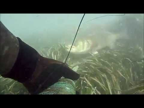 Come preparare un semolino a pescare su un crucian