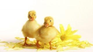 Обучалки для детей, Развивалки, Знакомимся с животным миром.