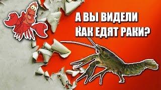 Тайная жизнь домашних питомцев - разведение раков The Secret Life of Pets  crayfish  小龍蝦