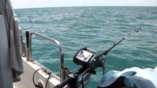 賓利號 船釣大石斑 X4中風了  grouper fishing