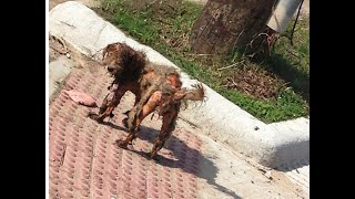 Homeless Dog Rescued - AMAZING TRANSFORMATION! A happy ending heartwarmer. Get your tissues ready!