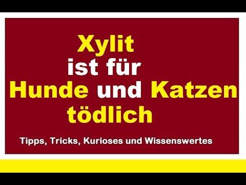 Xylit ist für Hunde tödlich Xylitol Gefahr Birkenzucker giftig Xucker gefährlich für Hund und Katze