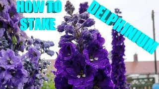 HOMEMADE PLANT SUPPORTS FOR DELPHINIUM