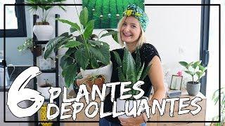 6 Plantes Dépolluantes Pour Un Intérieur Plus Sain !